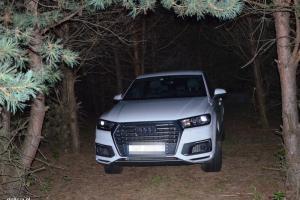 Audi ukryte w lesie